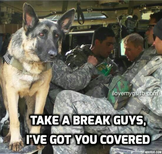 Best Police K Humor Images On Pinterest Animal Pictures - 28 powerful photos of service dogs that show just how loyal they are