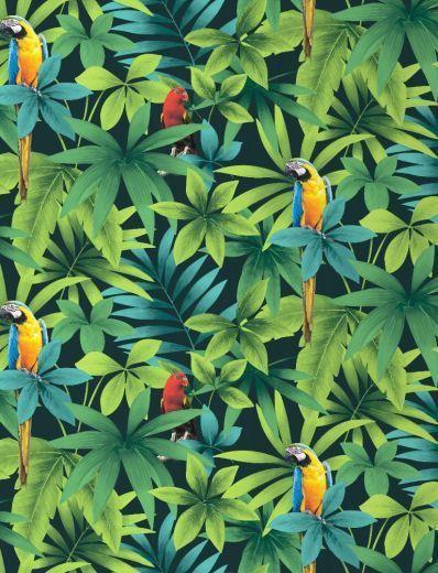 Tropical - Rainforest - Birds - Parrots - Macaw - Wallpaper