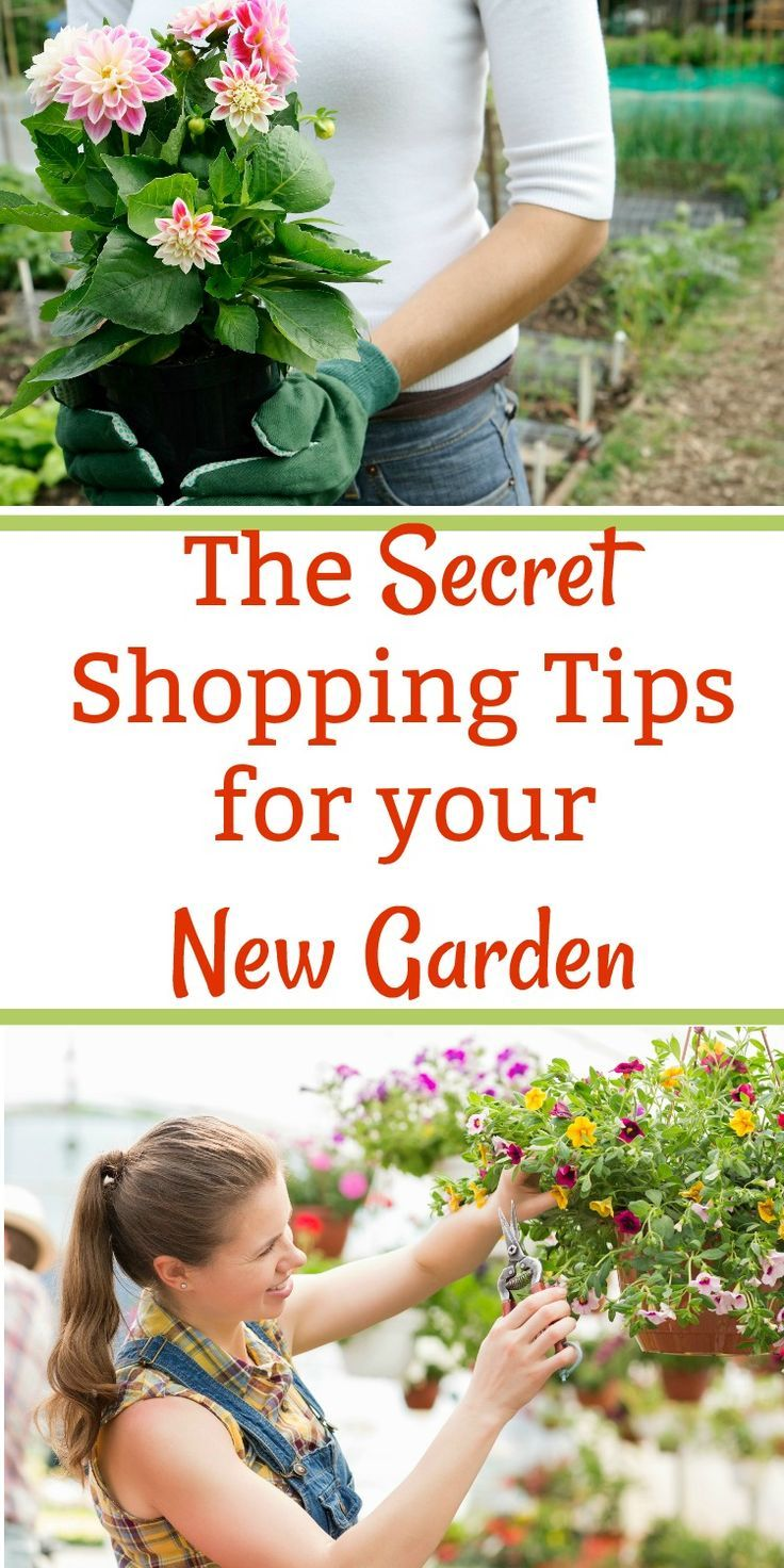 Gardening for beginners can be overwhelming the first time you go shopping at a nursery. These easy tips and ideas will help you start a beautiful backyard garden for your home even if you are on a budget. #gardening #gardeningtips #spring