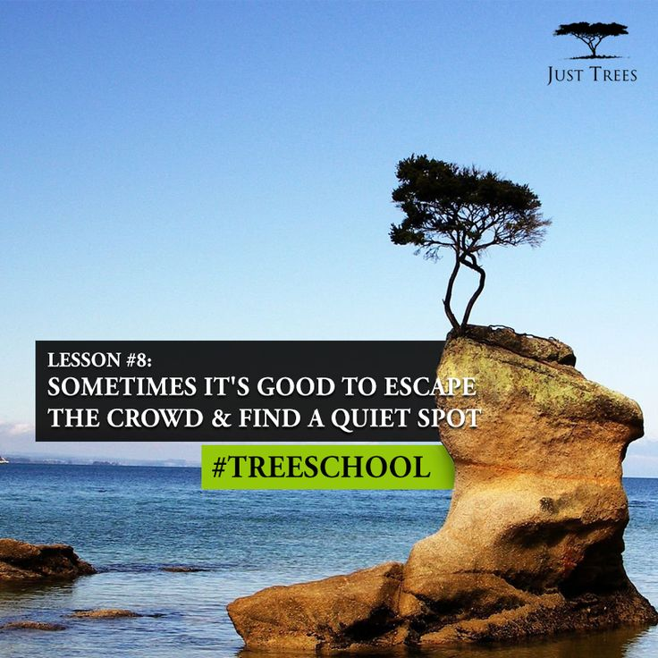 Lesson 8: Sometimes it's good to escape the crowd & find a quiet spot #TreeSchool