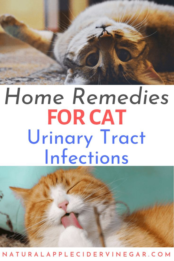 Apple Cider Vinegar Remedy For Cat Urinary Tract Infections Uti All Natural Home In 2020 Kitten Health Cat Health Remedies Natural Pet Care