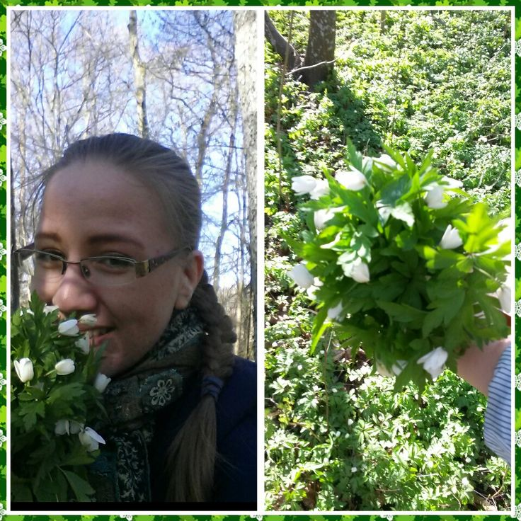 Todays task: picking wood anemones for the opening of the Jugend~Billnäs exhibition. #EKTAMuseumcenter #Raseborg #Ekenäs #Jugend #Billnäs #Artnouveau #Woodanemones