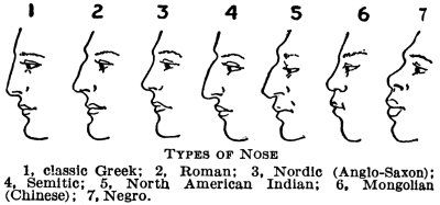 Types of Noses