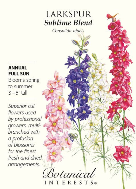 Annual. Grow in masses for a striking display of blue, pink and white blossoms. Larkspur blooms in the cooler weather of late spring and early summer, and in mild summer climates can continue through