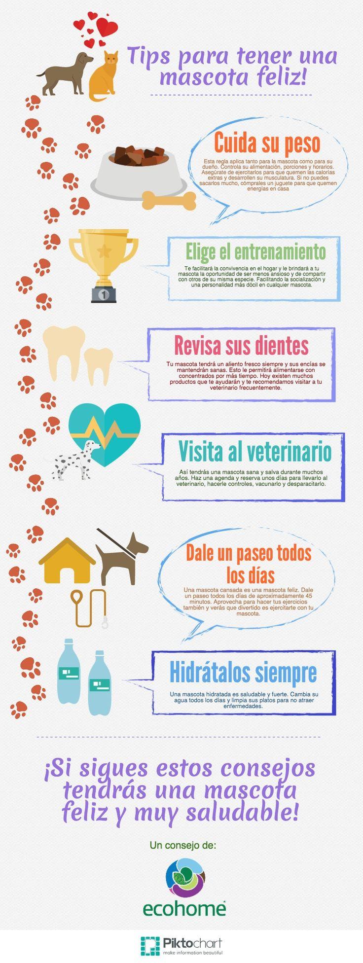 Sabías que parte de cuidar el medio ambiente es vivir en armonía con tus mascotas? Aprende más sobre sus cuidados