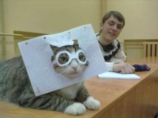 Papierpilotenbrille Katze | isnichwahr.de