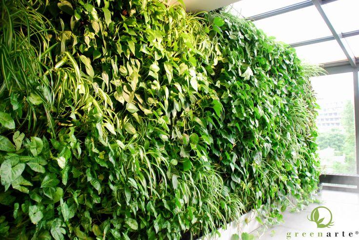 Zielona ściana w prywatnym mieszkaniu - Kraków maj 2014