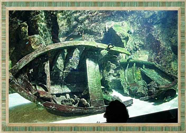 Aquarium de St-Gilles les Bains (fin) - Émincés de poulet façon créole