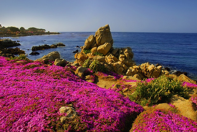 Pacific Grove  California the kid  use to love going here my favorite place in California.