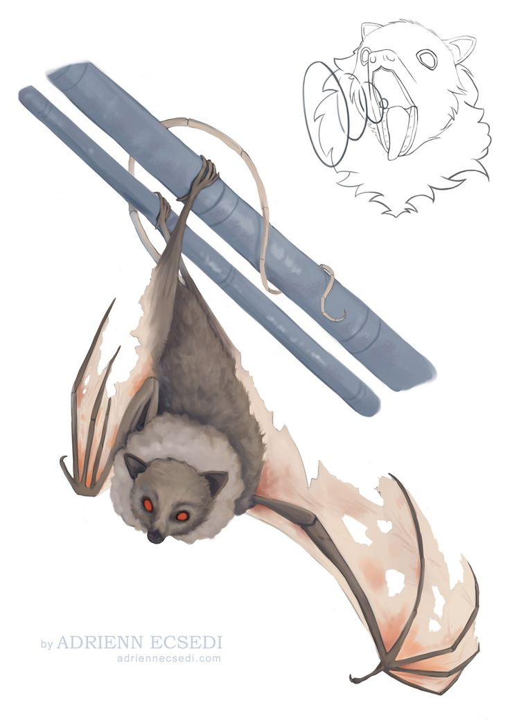Bat illustration by Adrienn Ecsedi  This is a commission work I've recently finished. The bat is a familiaris for my commissioner's character. On the sketch you can see him attacking, while the painting shows his hanging bat pose.