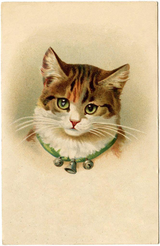 Машина, винтажные открытки с котиками