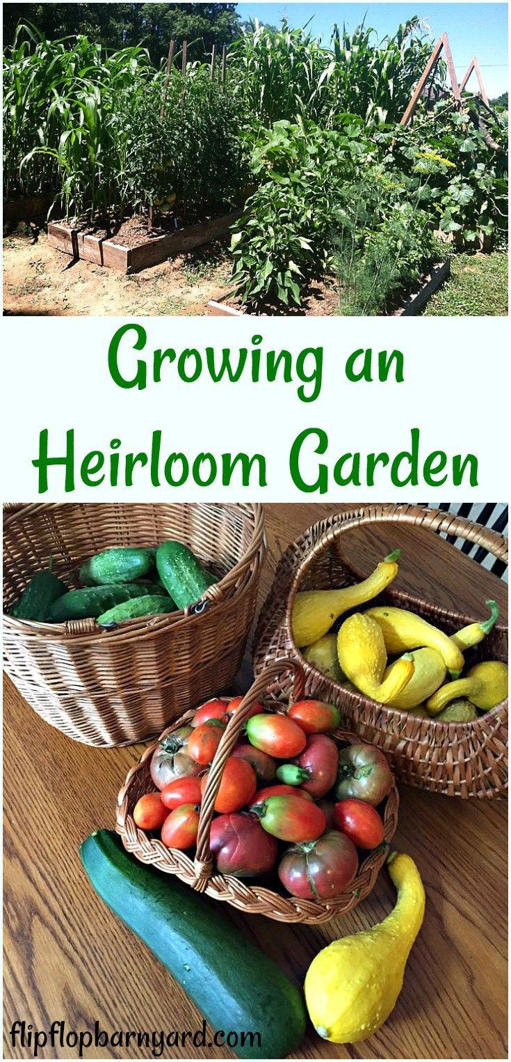 Growing And Heirloom Garden These Are The Reasons Why We Grow An Heirloom Garden Saving Organic Vegetable Garden Vegetable Garden Planner Growing Vegetables