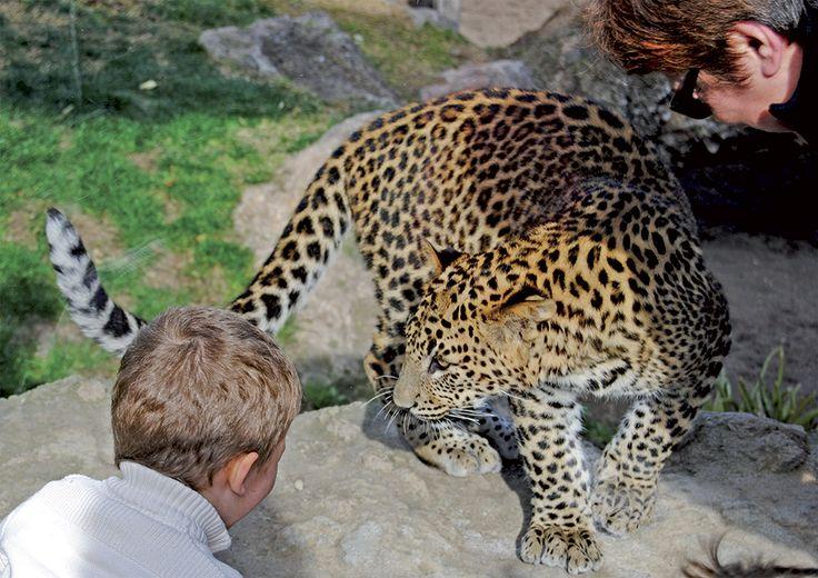 Planes con niños: dónde ver animales en semilibertad