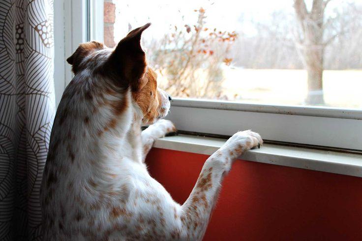 Den Hund alleine lassen – für viele Halter unmöglich! Hier sind 5 hilfreiche Tipps gegen die Trennungsangst.