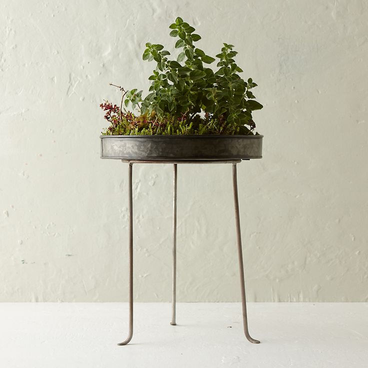 """Silver Footed Plant Stand, Tall. Small: 2.5""""H, 3.5"""" diameter Medium: 7""""H, 6.75"""" diameter Large: 12""""H, 8"""" diameter"""