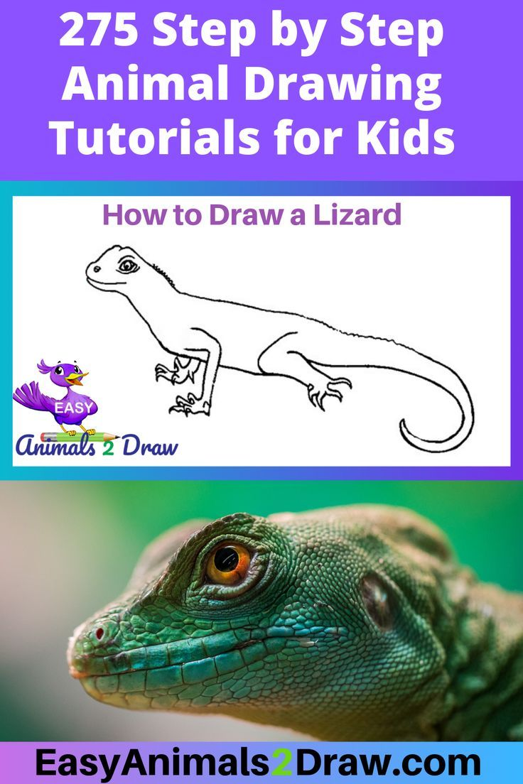 How To Draw A Lizard Step By Step En 2020