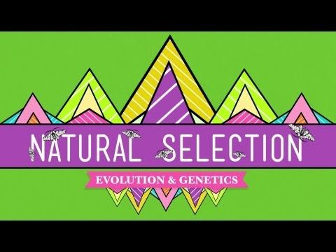 Natural Selection - Crash Course Biology #14 - 12:44 Module 10 Ch11 The increased fitness of individuals with particular adaptations causes the adaptation to become more prevalent in a population over generations. Artificial selection, when humans deliberately control an organism's fitness, causes the evolution of different breeds of animals and varieties of plants. Alleles that code for adaptations become more common in a population over generations as a result of natural selection.