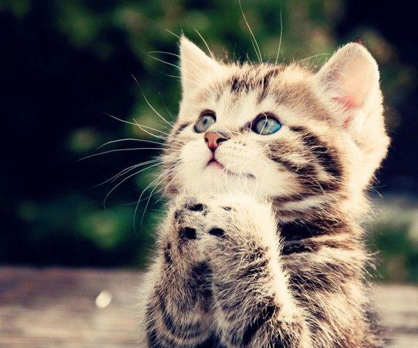 #cute kitten pics with captions, #cute kitten pics with quotes, #cute kitten pics download, #cute kitten pics with sayings, #cute kitten pics funny, #cute kitten pics with words, #cute kitten pics, #funny kitten pics