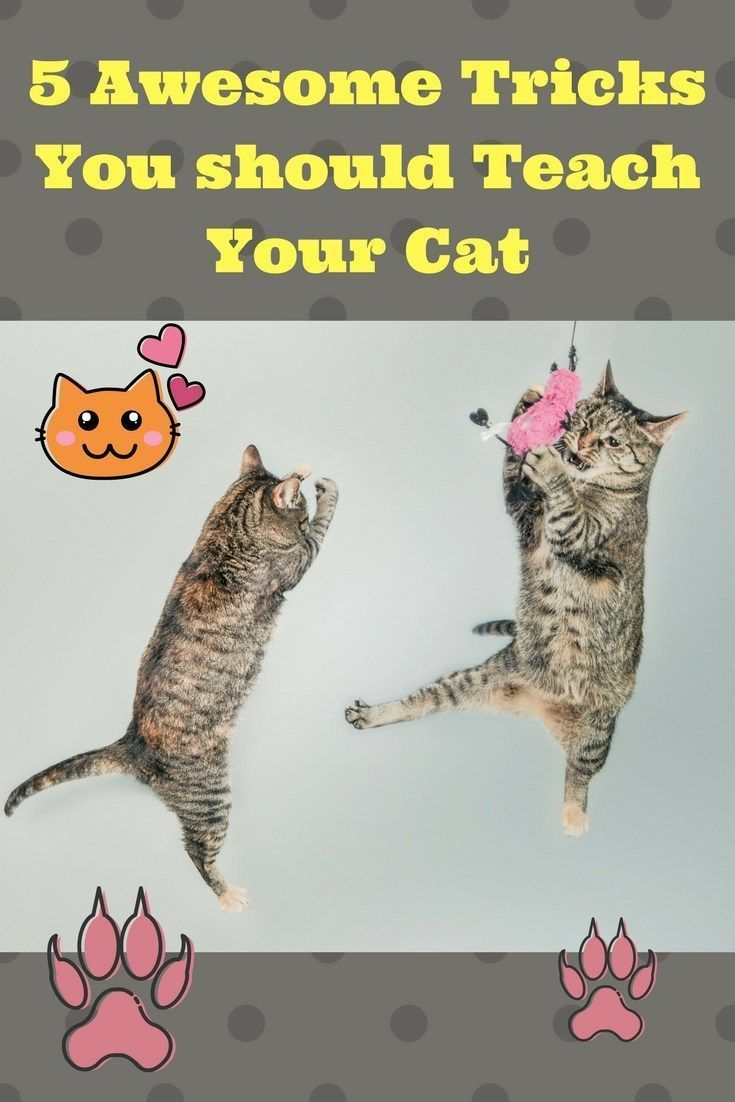 5 Awesome Tricks You Should Teach Your Cat Omega 333 Cat Training Cat Hacks Cat Training Scratching
