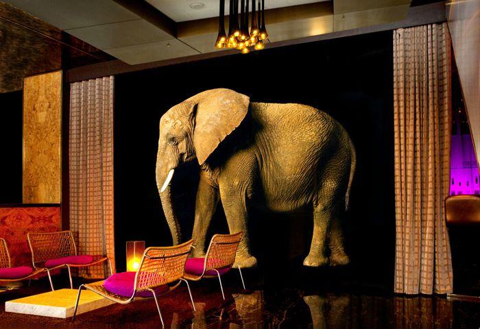 #Elephant #wallpaper ( #olifantbehang ) Maak jouw #wand nog #grootser met deze #imponerende #olifant, op #behang weliswaar. De #zwarte #achtergrond maakt  het behang erg #stijlvol.