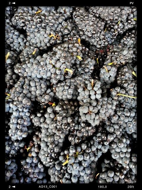 Vintage 2013 ... Pinot Noir