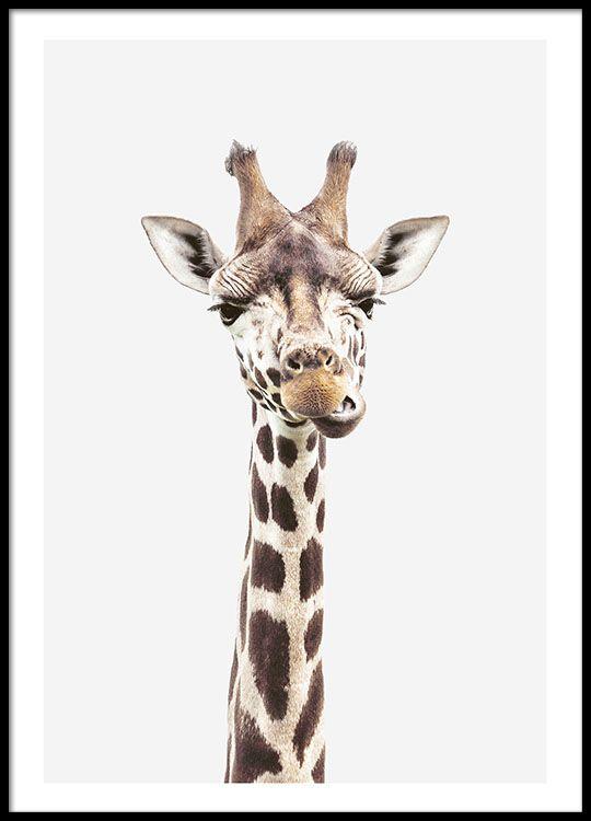 Baby giraffe, plakat i gruppen Plakater og posters / Størrelser / 40x50cm hos Desenio AB (8358)