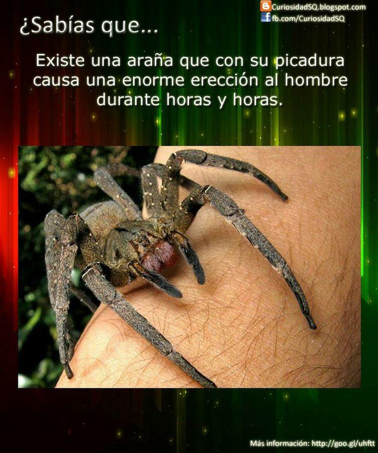 Las arañas!