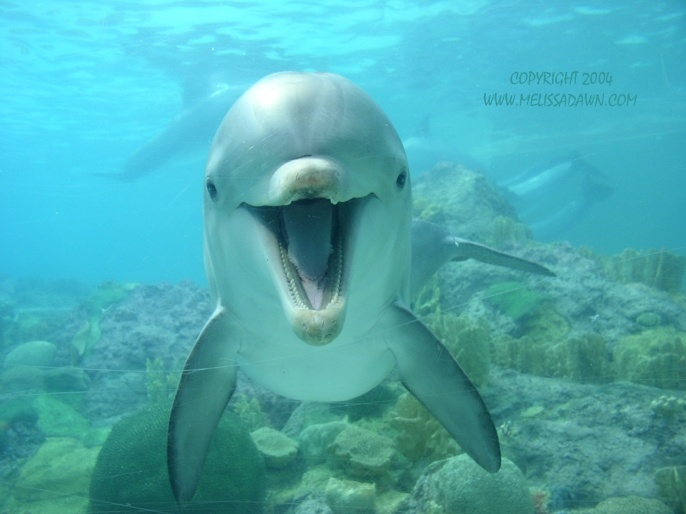 Dolphin - one of my favorite animals