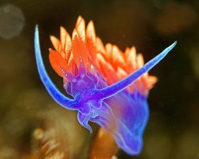 Beautiful Deep Sea Creatures | Stunning pictures of bright inhabitants of the deep sea. So much color ...