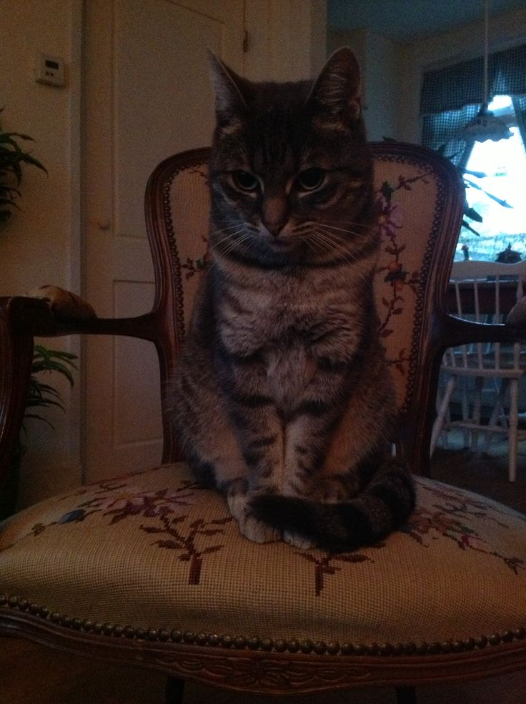 Ollie op de stoel, mijn gekke kat