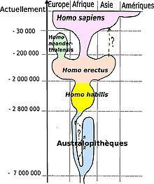 Homo sapiens — Wikipédia