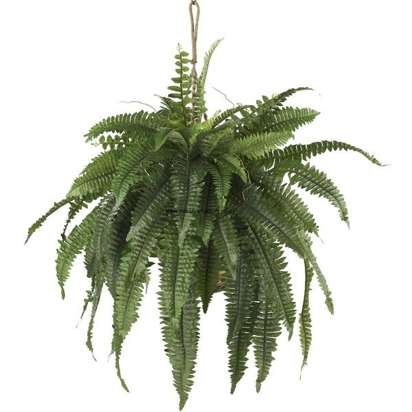 "22"" Large Boston Fern Silk Plant w/Hanging Basket ❤ liked on Polyvore featuring home, home decor, floral decor, artificial plants, fake plants, faux plants and artificial silk plants"