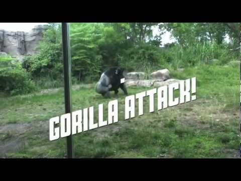 My Gorilla video