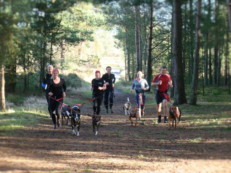 Canicross running with dogs