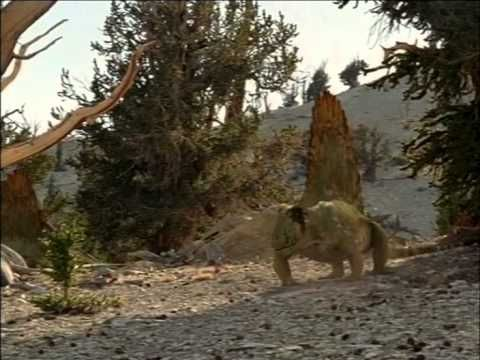 caminando con monstruos vida antes de los dinosaurios