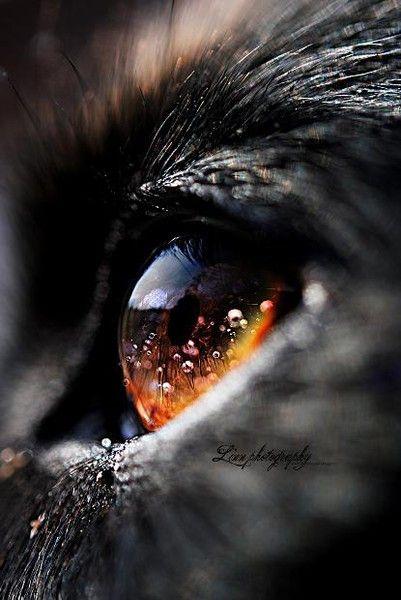 Tout un univers dans les yeux d'un chat !
