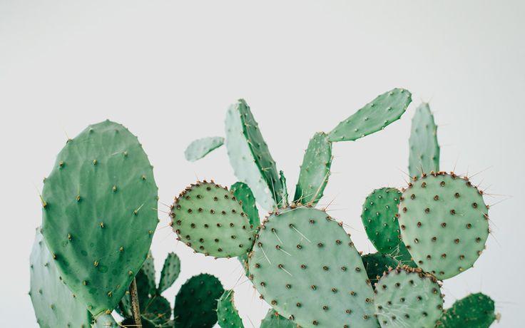 Je vous emmène à Copenhague dans un nouveau concept store nommé Kaktus København, pour les amoureux des cactus et succulentes.
