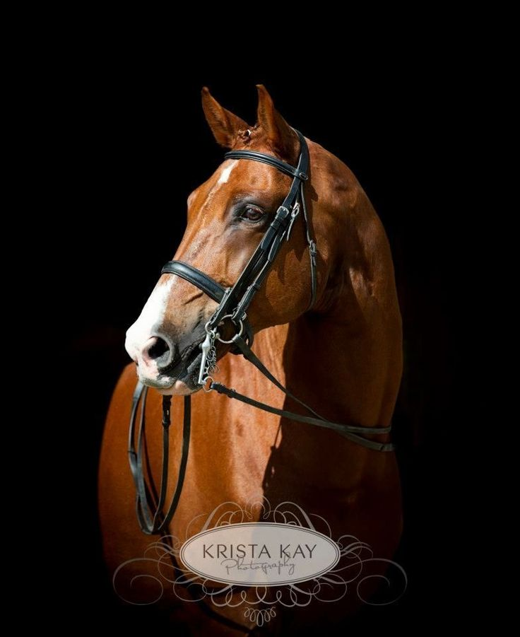 Best  Dressage Horses For Sale Ideas On   Pretty