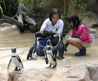 Day 3: Penguin Wonderland's coming to this tropical rainforest town. Lets try to get up close and personal with this endearing Antarctic bird. It'll be very fun to play with this snowy-world animal. #SGTravelBuddy