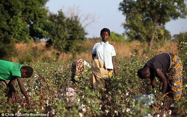 these people (and child) are picking cotton for victoria's secret products. for every $14 bra sold, the child that made it gets 4 cents. this is not okay.