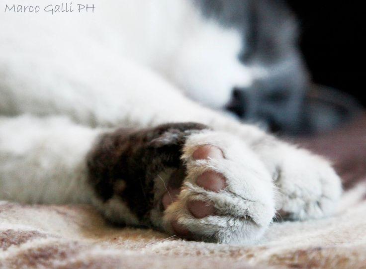 © copyright Marco Galli. Con Gatto Mrò. Galli Marco il fotografo dei gatti. CLICCA QUI https://www.facebook.com/ilgatto72?ref_type=bookmark