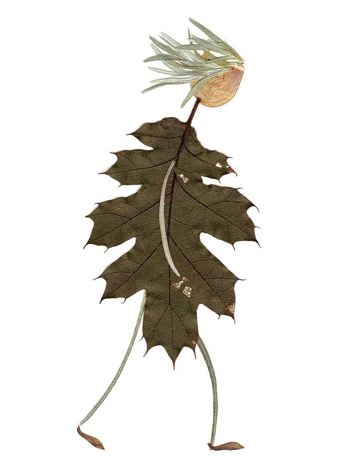 Pressed flower greeting card - digital print of original art - made of herbs, flowers and leaves grown in my garden. $3.75, via Etsy.