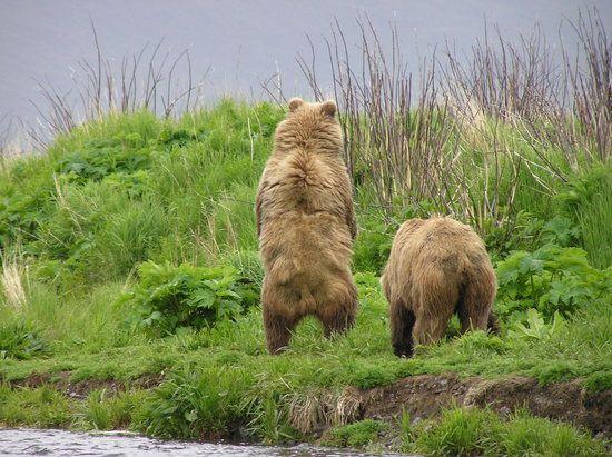 Kodiak Island Vacations