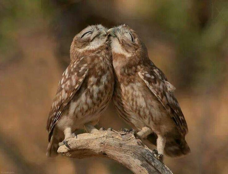 Bildergebnis für cuddling owls
