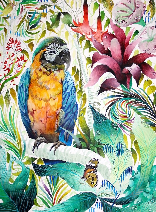 Parrot - Kate Morgan - Artist & Illustrator