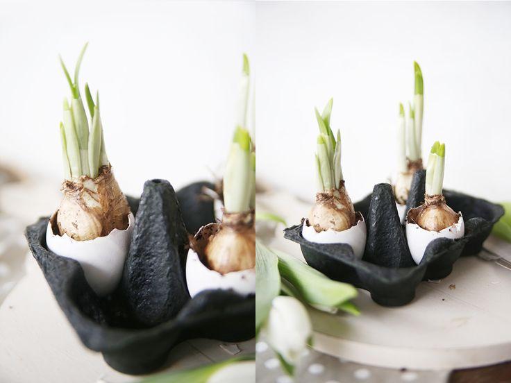 311 besten ostern bilder auf pinterest ostern diy ostern und frohe ostern. Black Bedroom Furniture Sets. Home Design Ideas