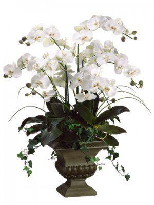 Orchid Arrangement                                                                                                                                                                                 More