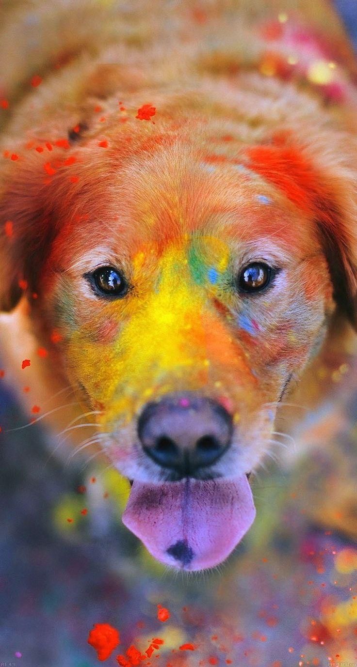 This dog got a new paint job
