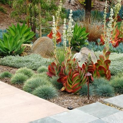 Landscape Desert Landscape Design Ideas, Pictures, Remodel, and Decor