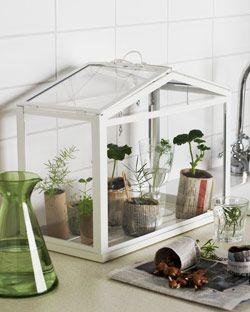 123 best vegetale images on pinterest jardinage plante interieur et vegetal. Black Bedroom Furniture Sets. Home Design Ideas